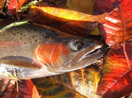 Autumn Fly Fish New Zealand - NZ Fly Fishing New Zealand Trout